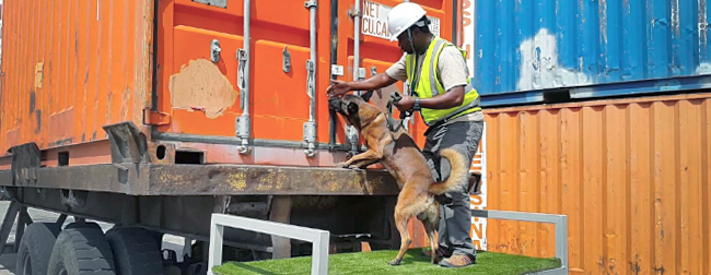 Photo of AWF-trained wildlife contraband detection snigger dog and handler inspecting container at seaport