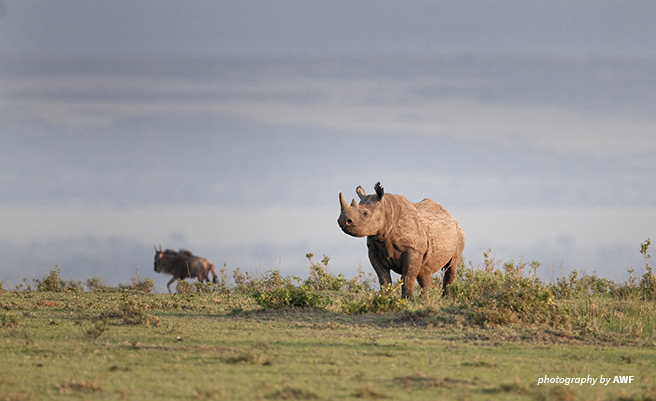 Photo of a black rhino against a blue skye