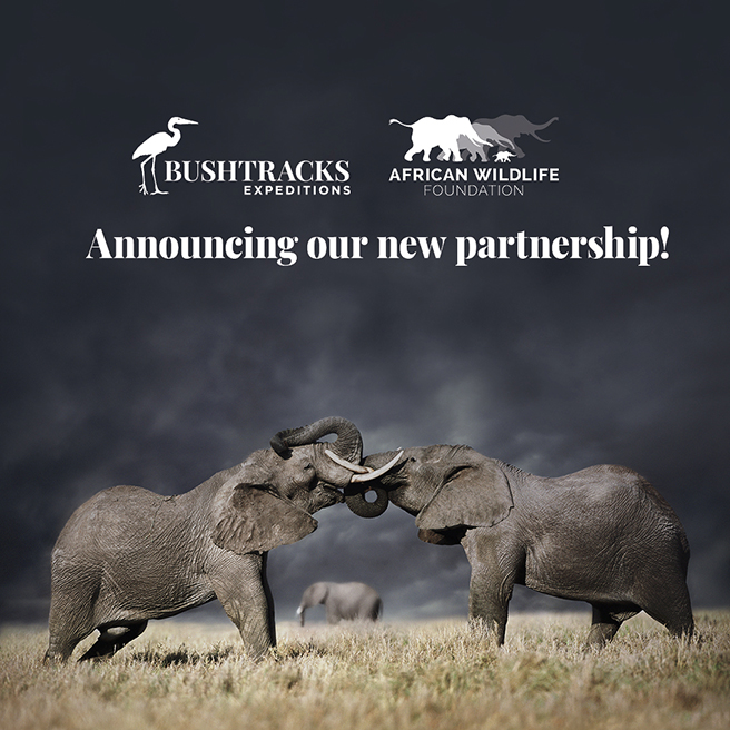 Graphic announcing new safari partnership between Bushtracks Expeditions and African Wildlife Foundation
