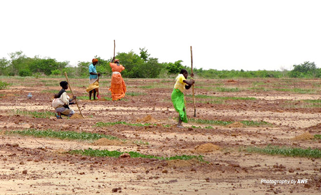 Photo of small-scale farmers working on a field in rural area