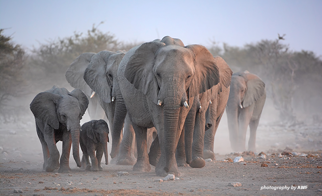 Photo of an elephant herd in Etosha, Namibia