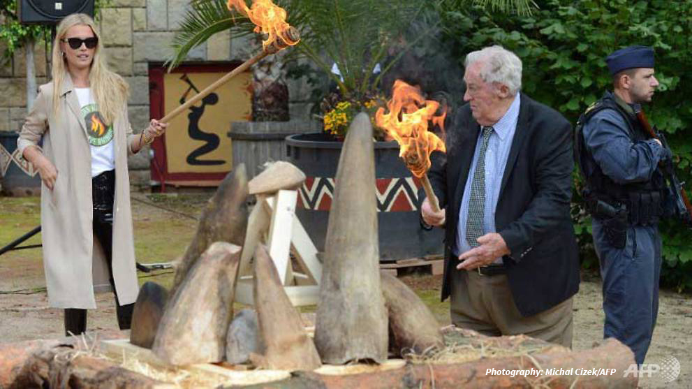 Photo of supermodel Veronica Varekova lighting the fire at the Dvur Kralove rhino horn burn