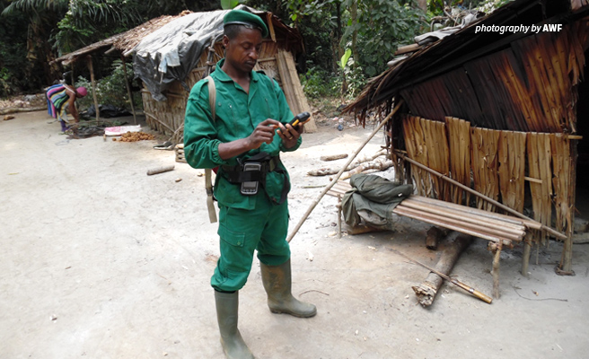 Photo of anti-poaching ranger in Dja Faunal Reserve using AWF-supplied monitoring technology