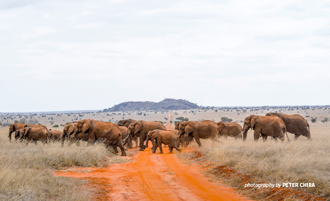 Photo of a herd of elephants crossing a road in LUMO Community Wildlife Sanctuary