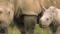 Rhino Federico Veronesi / www.federicoveronesi.com