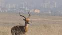 Image of an antelope in Nairobi National Park with the Nairobi skyline in the background.