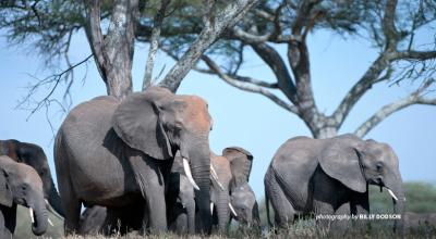 Photo of herd of elephants in Tanzania