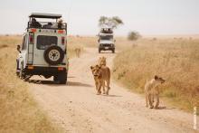 Tourists on safari observe a group of lions