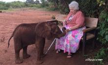 Wildlife conservation leader, Daphine Sheldrick, with an African elephant